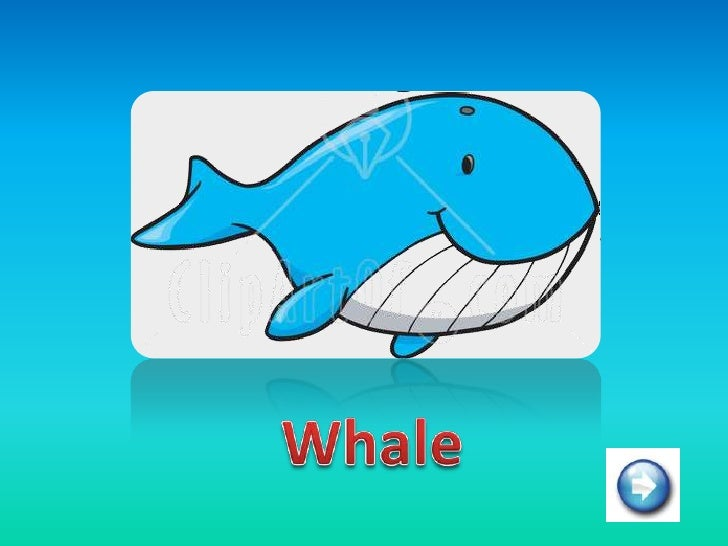 Aquatic animals  1 Slide 2