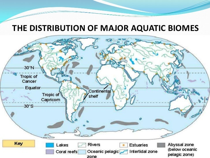 aquatic biomes Buy freshwater aquatic biomes (greenwood guides to biomes of the world) on  amazoncom ✓ free shipping on qualified orders.