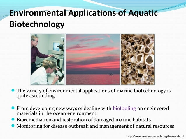 Great potential in marine biotechnology