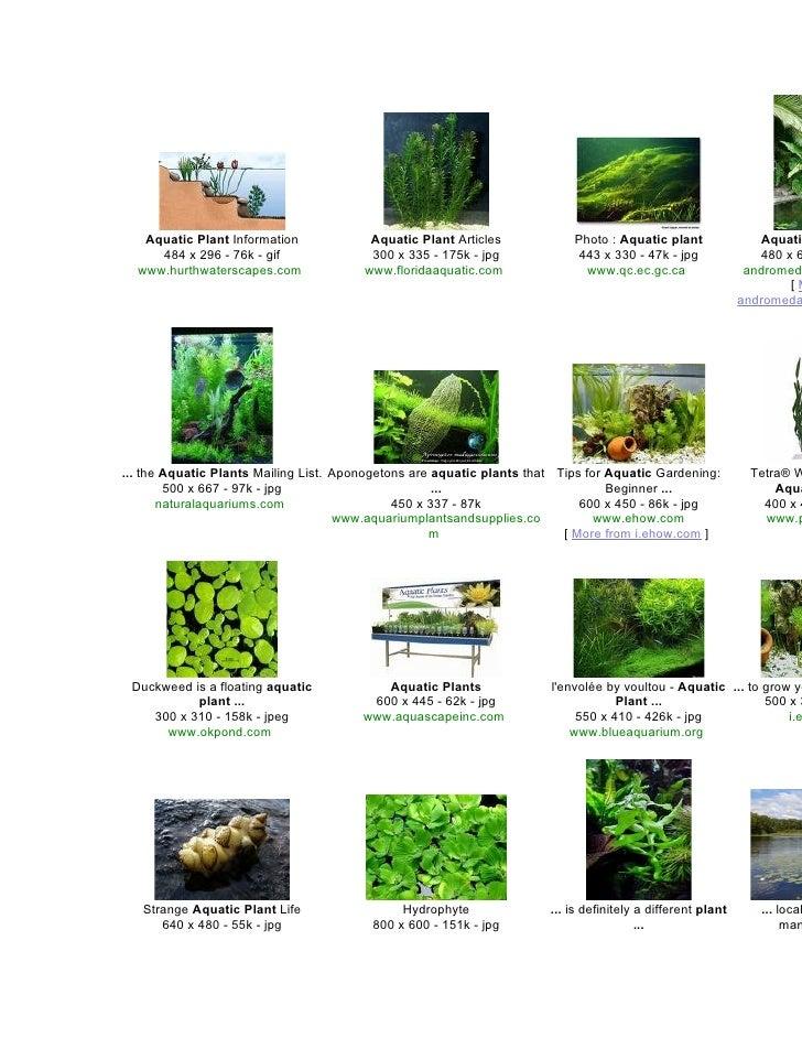 Aquatic Plant Information             Aquatic Plant Articles            Photo : Aquatic plant                Aquatic      ...