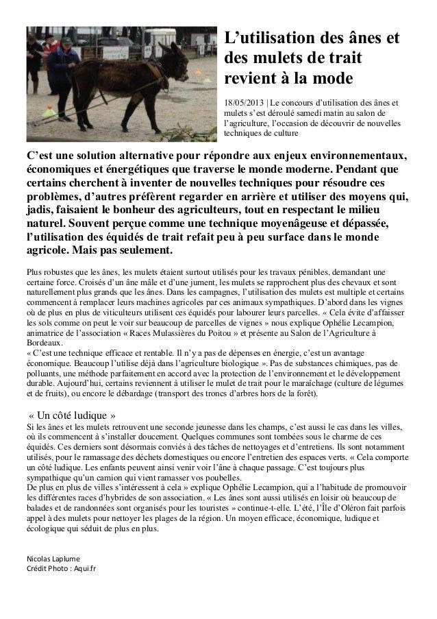 L'utilisation des ânes etdes mulets de traitrevient à la mode18/05/2013 | Le concours d'utilisation des ânes etmulets s'es...