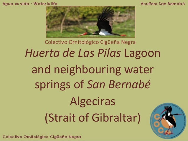 Colectivo Ornitológico Cigüeña Negra  Huerta de Las Pilas Lagoon and neighbouring water springs of San Bernabé Algeciras (...