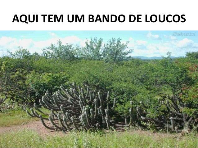 AQUI TEM UM BANDO DE LOUCOS