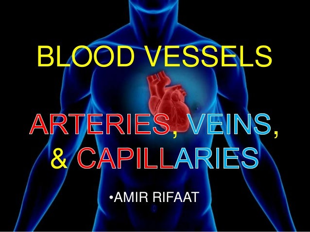 BLOOD VESSELS , , & •AMIR RIFAAT