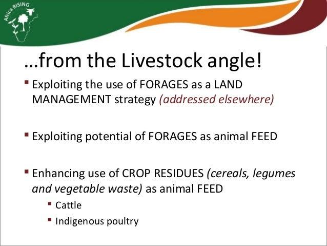 Livestock feed and vegetable improvement strategies Slide 2
