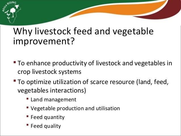 Livestock feed and vegetable improvement strategies Slide 3