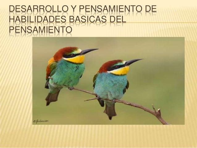 DESARROLLO Y PENSAMIENTO DE HABILIDADES BASICAS DEL PENSAMIENTO