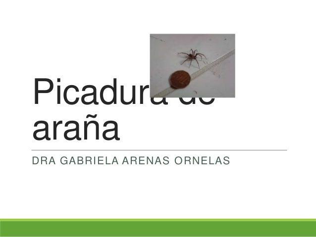 Picadura de araña DRA GABRIELA ARENAS ORNELAS