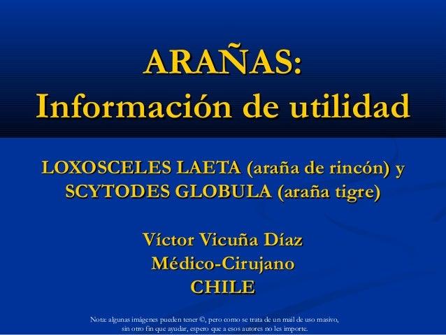 ARAÑAS:Información de utilidadLOXOSCELES LAETA (araña de rincón) y  SCYTODES GLOBULA (araña tigre)                     Víc...