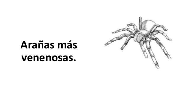 Arañas más venenosas.