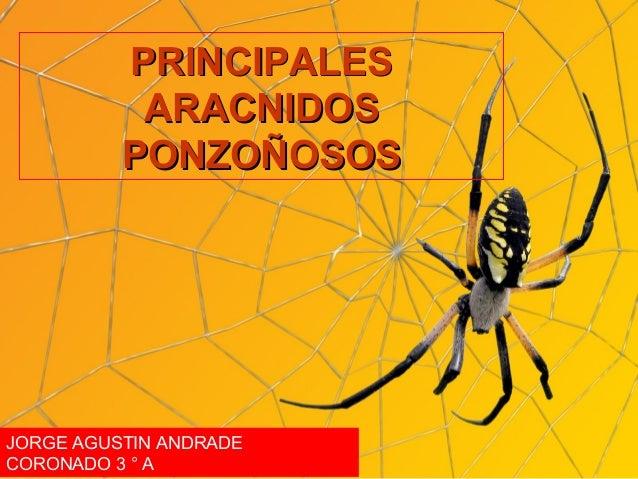 PRINCIPALESPRINCIPALES ARACNIDOSARACNIDOS PONZOÑOSOSPONZOÑOSOS JORGE AGUSTIN ANDRADE CORONADO 3 ° A