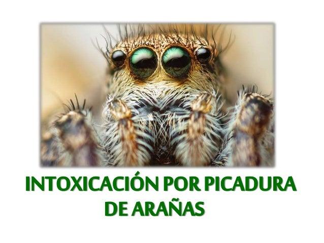 3000-5000 Muertes al año. • Clase: Árachnida. • 30, 000 especies. • 6 géneros importantes. • México 50 familias, 2 Importa...