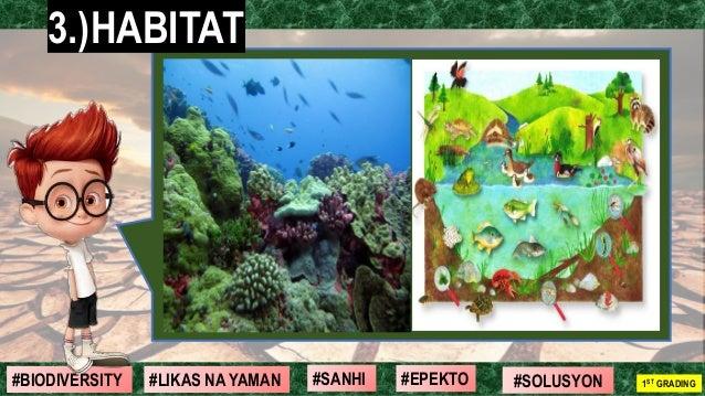 #SOLUSYON#EPEKTO#SANHI#BIODIVERSITY 1ST GRADING#LIKAS NA YAMAN 3.)HABITAT