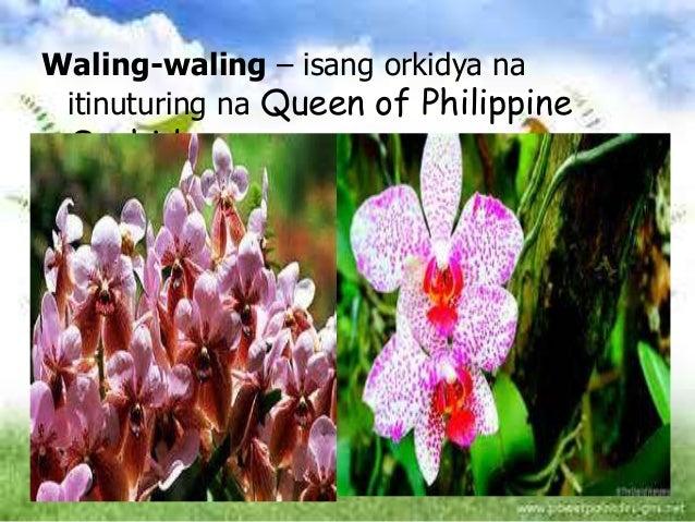 yaman ng pilipinas Likas na yaman ng pilipinas -yamang lupa -yamag tubig -yamang mineral - yamang gubat mga likas na yaman ayon sa anyo -yamang.
