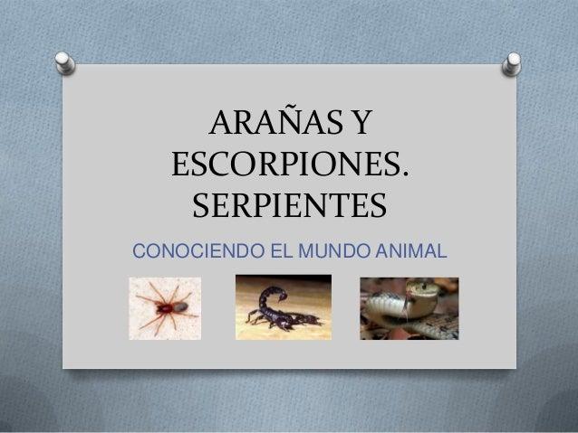 ARAÑAS Y ESCORPIONES. SERPIENTES CONOCIENDO EL MUNDO ANIMAL