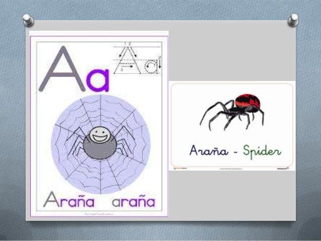Arañas, escorpión y serpientes