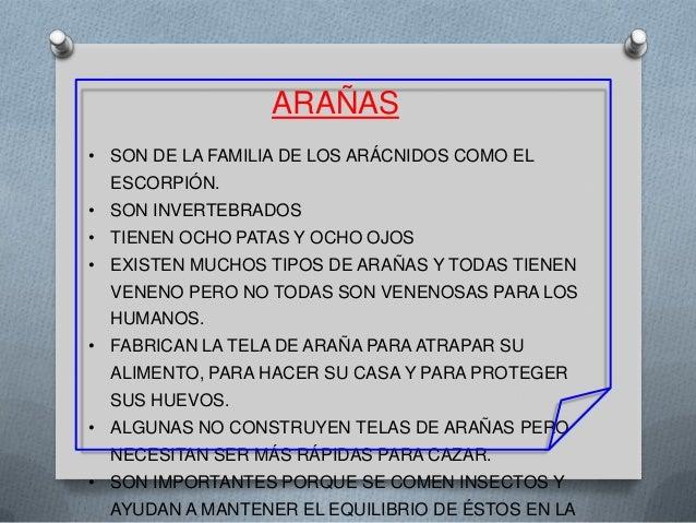 ARAÑAS • SON DE LA FAMILIA DE LOS ARÁCNIDOS COMO EL ESCORPIÓN. • SON INVERTEBRADOS • TIENEN OCHO PATAS Y OCHO OJOS • EXIST...