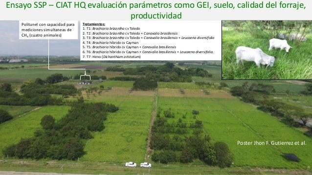 Tratamientos: 1. T1: Brachiaria brizantha cv Toledo 2. T2: Brachiaria brizantha cv Toledo + Canavalia brasiliensis 3. T3: ...