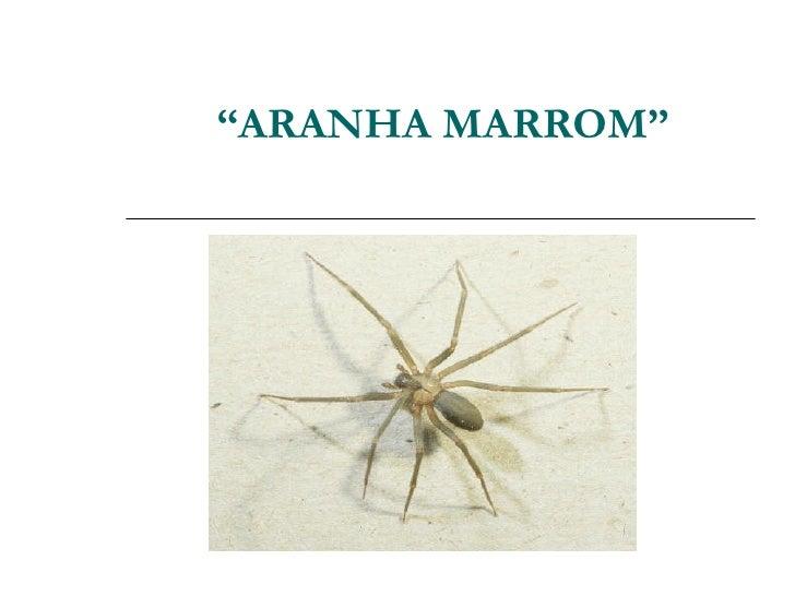""""""" ARANHA MARROM"""""""