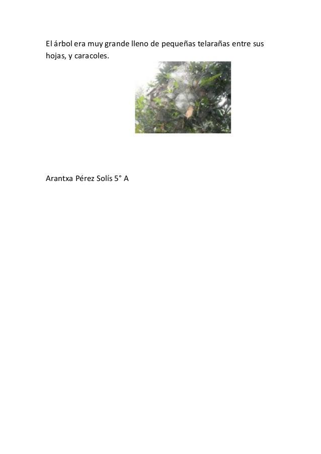 El árbol era muy grande lleno de pequeñas telarañas entre sushojas, y caracoles.Arantxa Pérez Solís 5° A