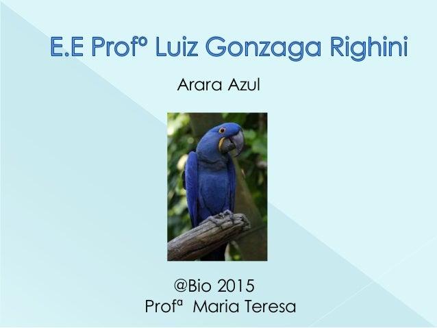 Arara Azul @Bio 2015 Profª Maria Teresa