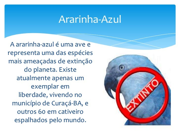 Ararinha Azul: Luís Marins: 9788541605366: …