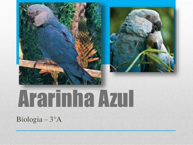 Ararinha Azul Biologia – 3°A