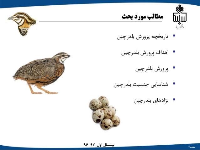 Arashnia quail Slide 2