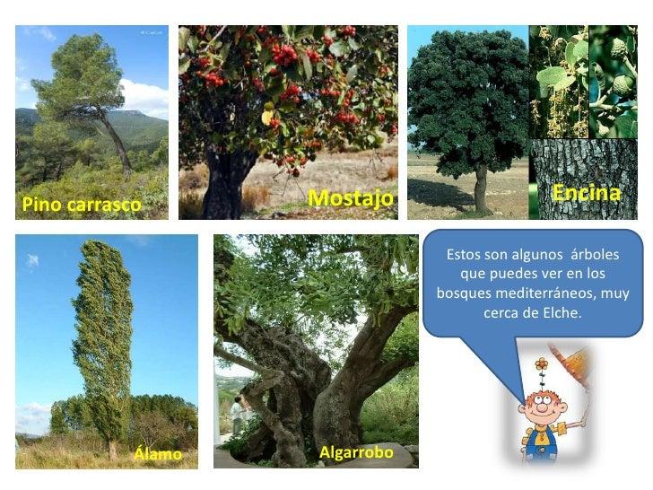 Arbol arbusto y hierba - Nombres de arbustos ...