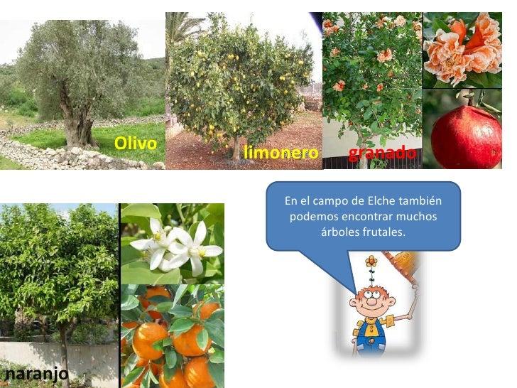Arbol arbusto y hierba