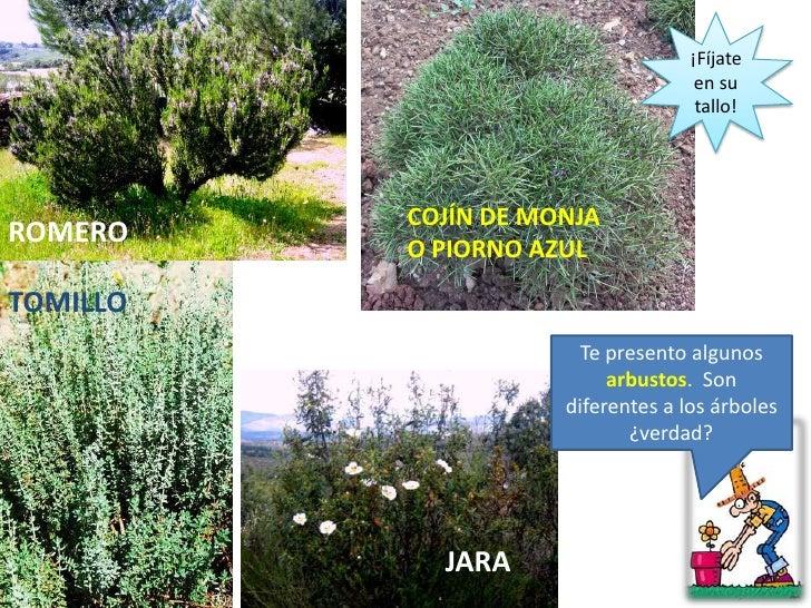 arbol arbusto y hierba On nombres de arbustos