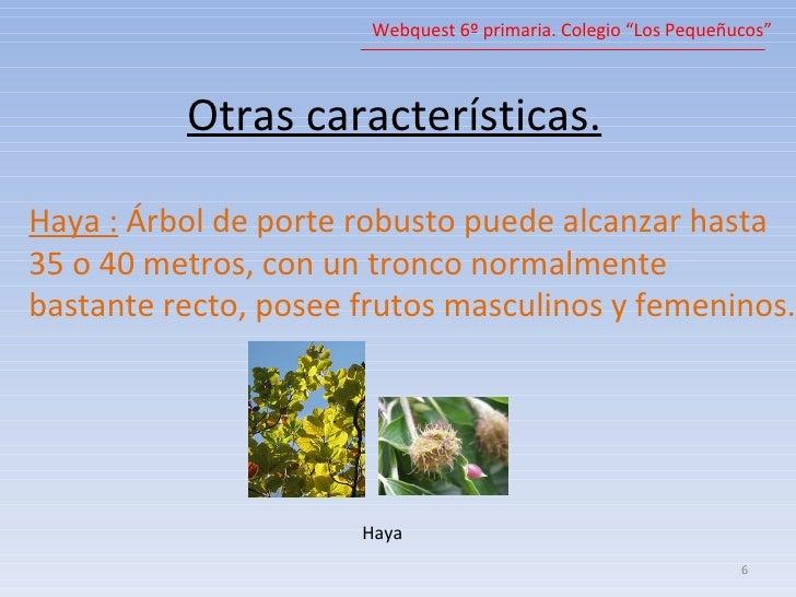Arboles for Las caracteristicas de los arboles