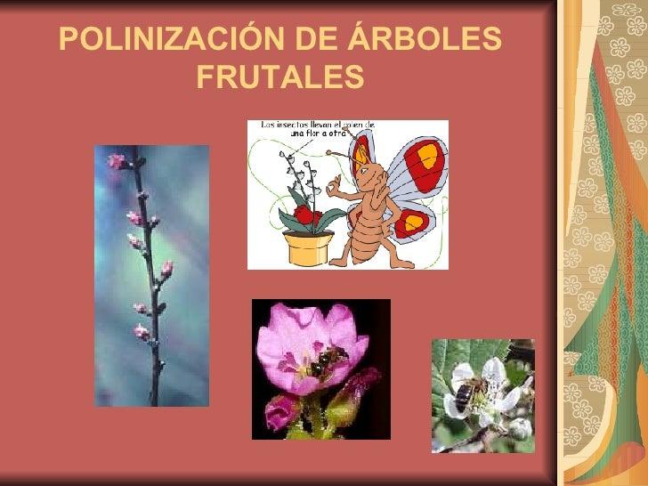Arboles frutales - Como se podan los arboles frutales ...