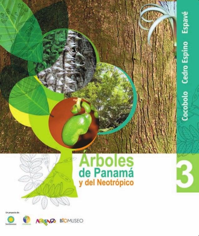 de Panamá y del Neotrópico  UÜDÜQXÏBÉ'    ¡agua sromuseo     Cocobolo Cedro Espino Espavé