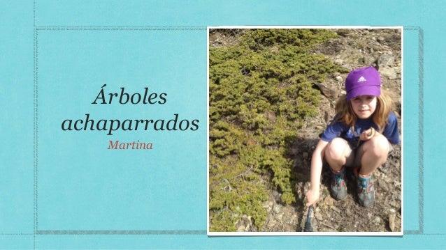 Árboles achaparrados Martina