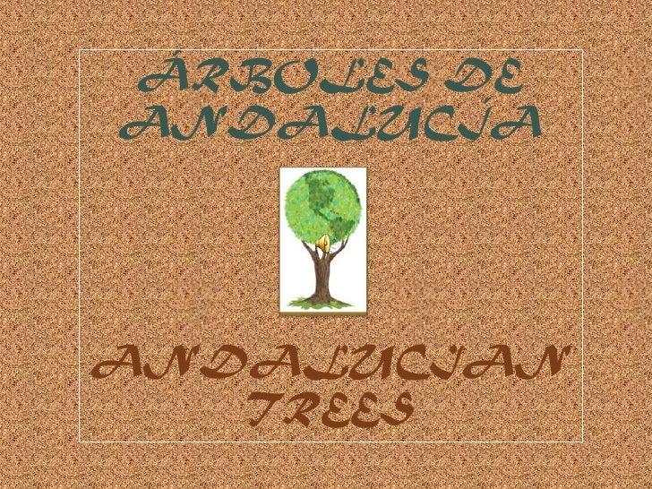 ÁRBOLES DEANDALUCÍAANDALUCIAN   TREES
