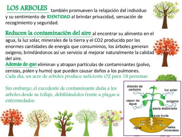 Arboles en la ciudad la importancia de los chico isabelle for Porque son importantes los arboles wikipedia