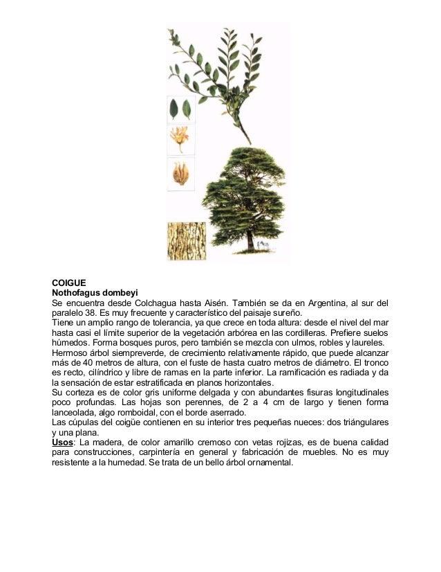 Arboles nativos chile for Arboles perennes de crecimiento rapido en argentina