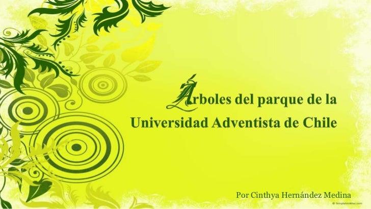 Por Cinthya Hernández Medina