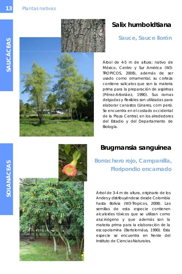 Arboles y arbustos un - Lista nombre arbustos ...