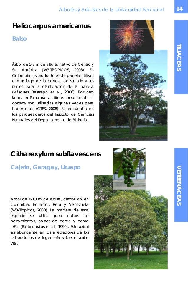 Arboles y arbustos un - Arboles y arbustos ...