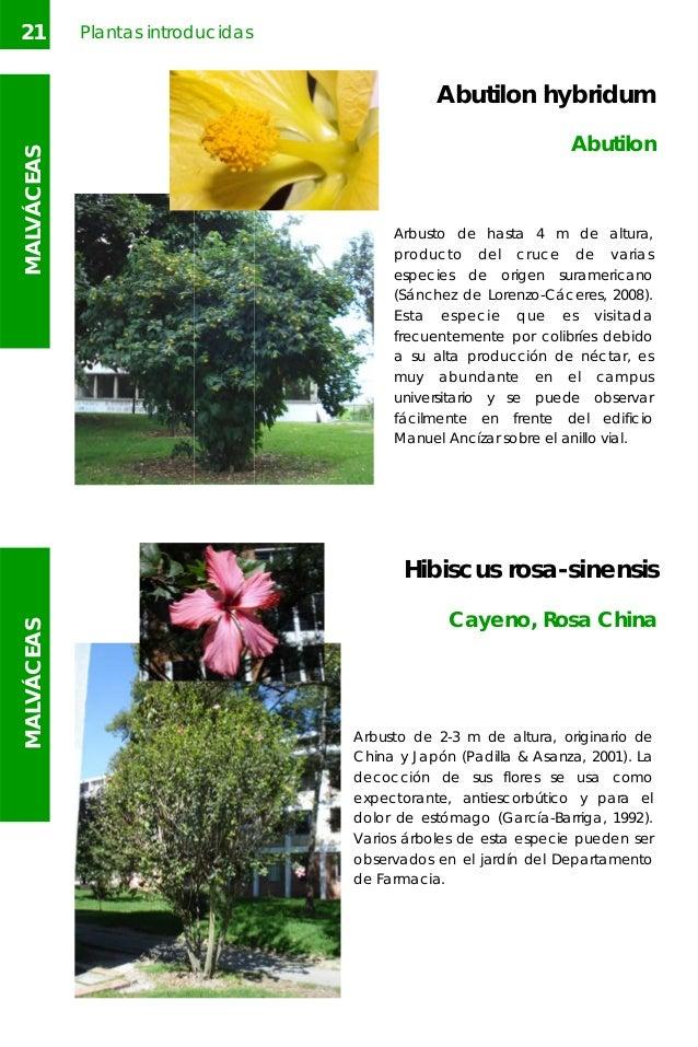 Arboles y arbustos un for Especies de arbustos