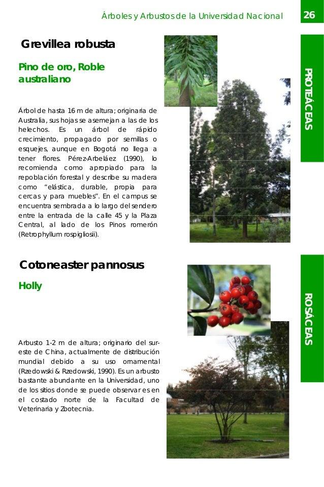 Arboles y arbustos un for Arbol comun