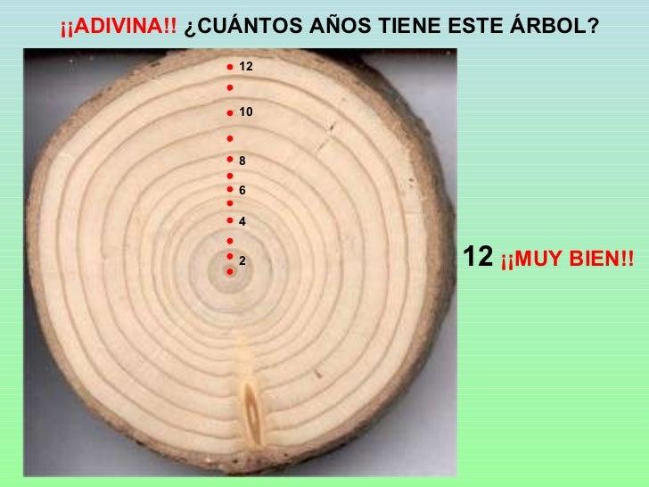 Arboles y bosques for Cuanto mide un arbol