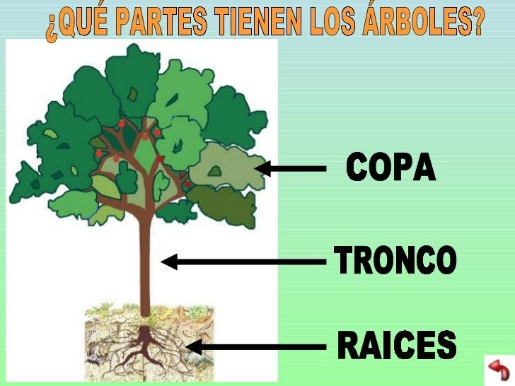 arboles y bosques