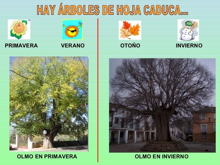 Arboles y bosques for Arboles frutales de hoja caduca