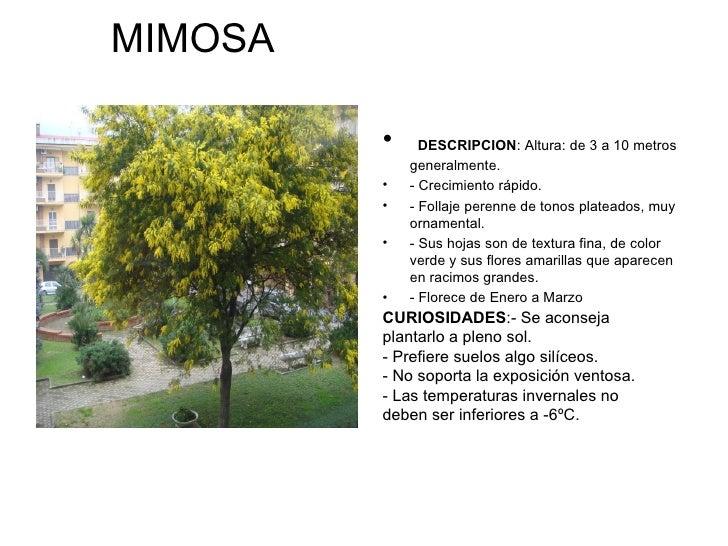 Arboles y plantas de errenter a jonathan for Arboles perennes de crecimiento rapido en argentina