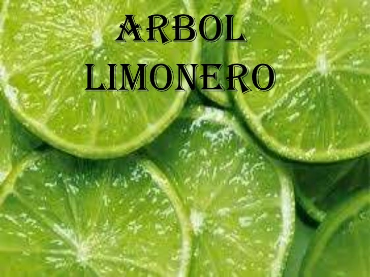 ARBOLLIMONERO