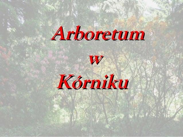 ArboretumArboretum ww KórnikuKórniku
