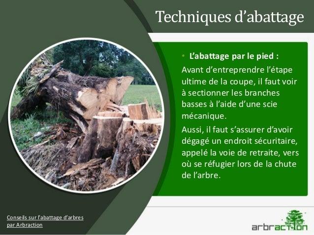 Comment abattre un arbre arbraction - Comment couper les branches d un arbre ...